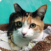 Adopt A Pet :: Celeste - Newport Beach, CA
