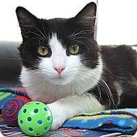 Adopt A Pet :: Bradley - Irvine, CA