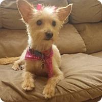 Adopt A Pet :: Kim - San Diego, CA