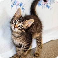 Adopt A Pet :: Sam - Larned, KS