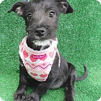 Adopt A Pet :: Kiana - San Diego, CA