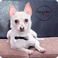 Adopt A Pet :: Olaf - Apache Junction, AZ