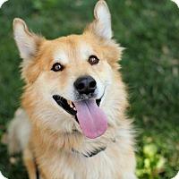 Adopt A Pet :: Louie! - Sacramento, CA