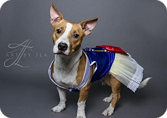 Jack Russell Terrier Mix Dog for adoption in Baton Rouge, Louisiana - Faith