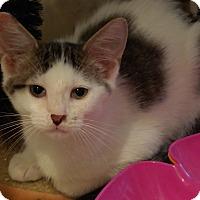 Adopt A Pet :: Fonz - Trevose, PA