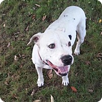 Adopt A Pet :: Dozer - Fort Wayne, IN