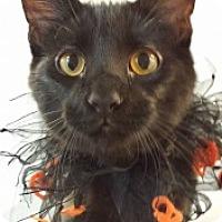 Adopt A Pet :: Olive Wow 110817 - Joplin, MO