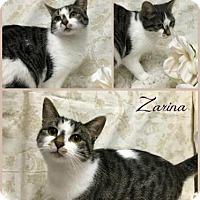 Adopt A Pet :: Zarina - Joliet, IL