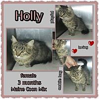 Adopt A Pet :: Holly - Richmond, CA