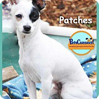 Adopt A Pet :: Patches - South Bend, IN