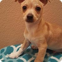 Adopt A Pet :: Luke - Evergreen, CO