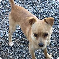 Adopt A Pet :: Lenny - Auburn, WA