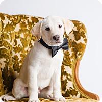 Adopt A Pet :: Mal - Ogden, UT