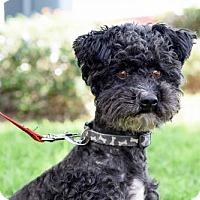 Adopt A Pet :: Coventry - San Diego, CA