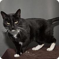 Adopt A Pet :: Xena - Waynesboro, PA