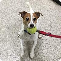 Adopt A Pet :: Sammie - Blue Bell, PA