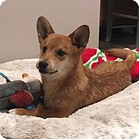 Adopt A Pet :: Sam - Centreville, VA