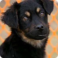 Adopt A Pet :: BUDDY-Currently in foster - Roanoke, VA
