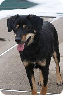 Hound (Unknown Type) Mix Dog for adoption in Rockaway, New Jersey - Dexter