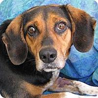 Adopt A Pet :: Loretta Lynn - Cuba, NY
