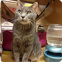 Adopt A Pet :: Savannah - Monroe, GA