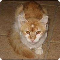 Adopt A Pet :: Sue Linda - Phoenix, AZ