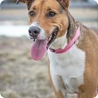 Adopt A Pet :: Zoey - Cheyenne, WY