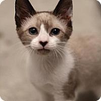 Adopt A Pet :: Jamie - Sacramento, CA