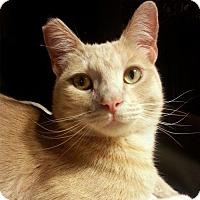 Adopt A Pet :: Theo - Alameda, CA