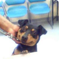 Adopt A Pet :: GIZZY - Louisville, KY