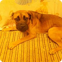 Adopt A Pet :: *BREE - Upper Marlboro, MD