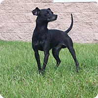 Adopt A Pet :: Max - Myakka City, FL