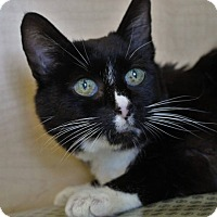 Adopt A Pet :: Miss miss - Redding, CA