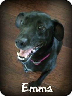 Labrador Retriever Dog for adoption in Monroe, North Carolina - Emma