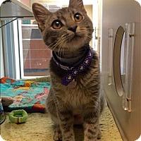 Adopt A Pet :: Gracie - Monterey, CA