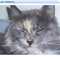 Adopt A Pet :: Katerina - Geneseo, IL