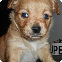 Adopt A Pet :: lass - Yucaipa, CA