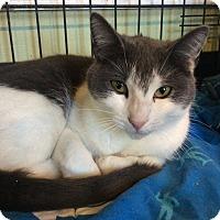 Adopt A Pet :: Greta - Breinigsville, PA