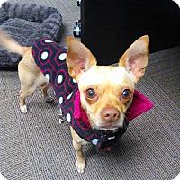 Adopt A Pet :: ROCKY! - Mastic Beach, NY