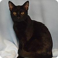 Adopt A Pet :: Thumper - Morgantown, WV
