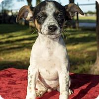 Adopt A Pet :: JO-Mila's baby - Alvin, TX
