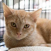 Adopt A Pet :: Ark - New York, NY