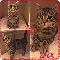 Adopt A Pet :: Zach - Jeffersonville, IN