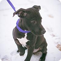 Adopt A Pet :: Annaleise - Stillwater, OK