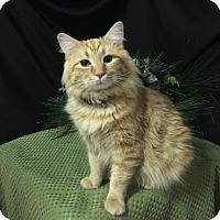 Adopt A Pet :: Orange Crush - Fayetteville, GA