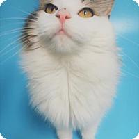 Adopt A Pet :: Molly - Monroe, MI