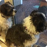 Adopt A Pet :: Buddy & Bella - Vancouver, WA