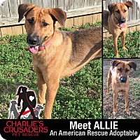 Adopt A Pet :: Allie - Spring City, PA