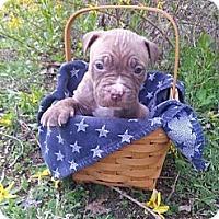 Adopt A Pet :: Male # 4 - Roaring Spring, PA