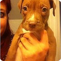 Adopt A Pet :: Memphis Belle - Mesa, AZ